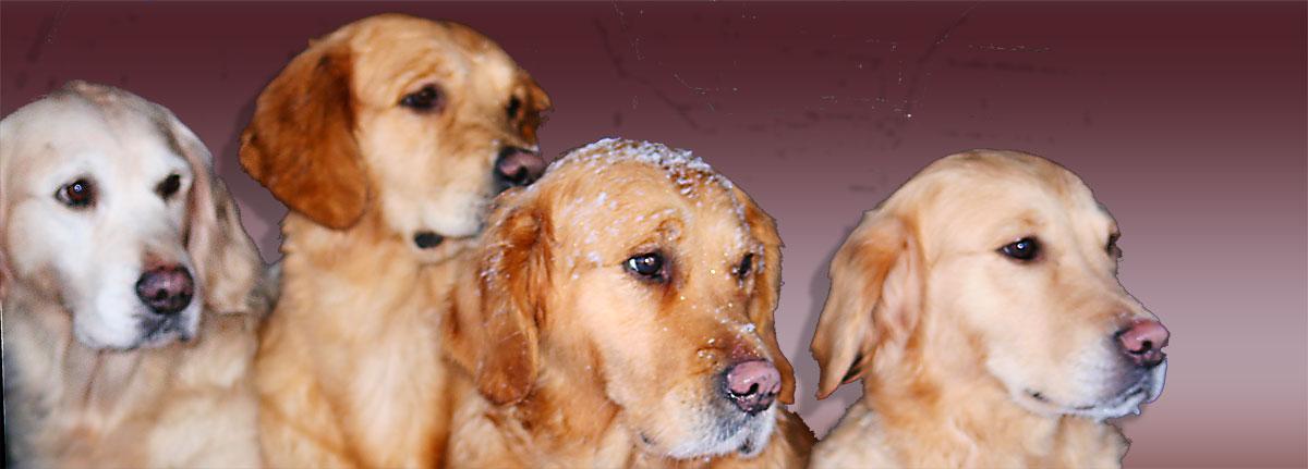 urklipphundarna