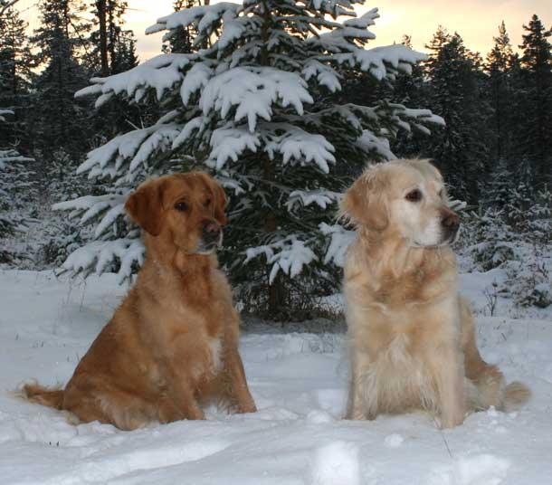 vinternov2007
